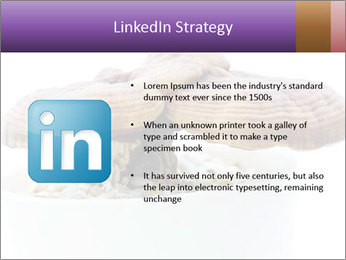 Chinese Mushroom PowerPoint Template - Slide 12