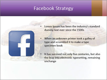 Chinese Mushroom PowerPoint Template - Slide 6