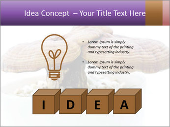 Chinese Mushroom PowerPoint Template - Slide 80