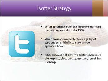 Chinese Mushroom PowerPoint Template - Slide 9
