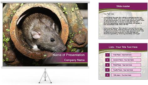Brown Rat PowerPoint Template