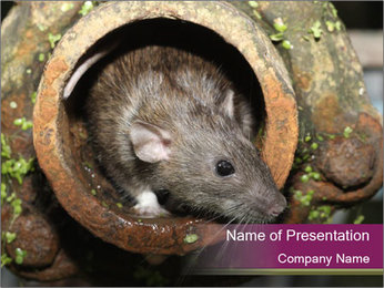 Brown Rat PowerPoint Templates - Slide 1