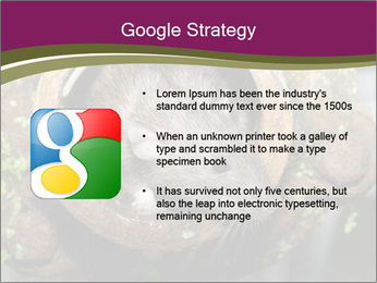Brown Rat PowerPoint Templates - Slide 10