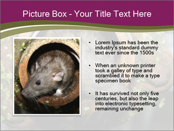 Brown Rat PowerPoint Templates - Slide 13