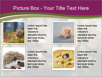Brown Rat PowerPoint Templates - Slide 14