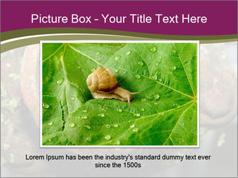Brown Rat PowerPoint Templates - Slide 15