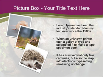 Brown Rat PowerPoint Templates - Slide 17