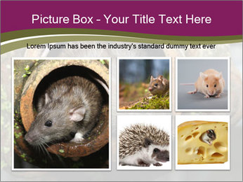 Brown Rat PowerPoint Templates - Slide 19