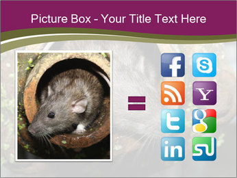Brown Rat PowerPoint Templates - Slide 21