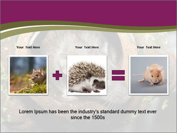 Brown Rat PowerPoint Templates - Slide 22