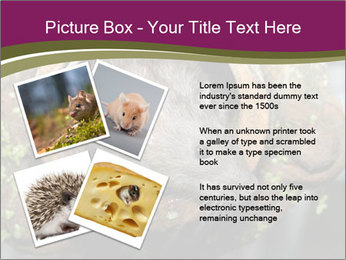 Brown Rat PowerPoint Templates - Slide 23