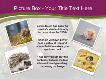 Brown Rat PowerPoint Templates - Slide 24