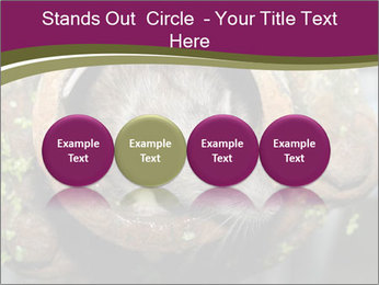 Brown Rat PowerPoint Templates - Slide 76