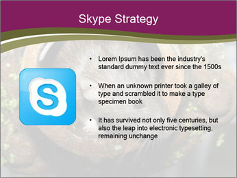 Brown Rat PowerPoint Templates - Slide 8