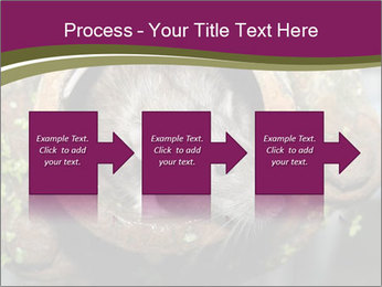 Brown Rat PowerPoint Templates - Slide 88
