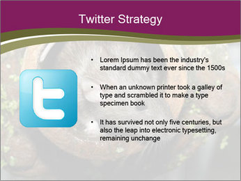 Brown Rat PowerPoint Templates - Slide 9