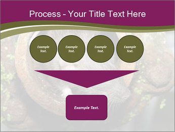 Brown Rat PowerPoint Templates - Slide 93