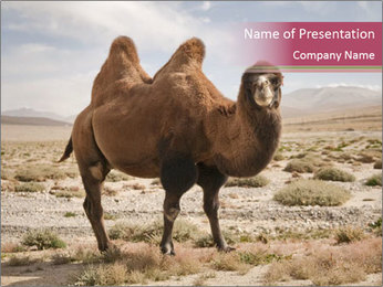 Funny Camel PowerPoint Template - Slide 1