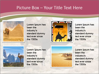 Funny Camel PowerPoint Template - Slide 14