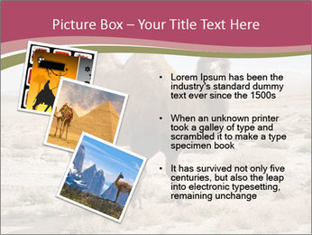 Funny Camel PowerPoint Template - Slide 17