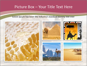 Funny Camel PowerPoint Template - Slide 19