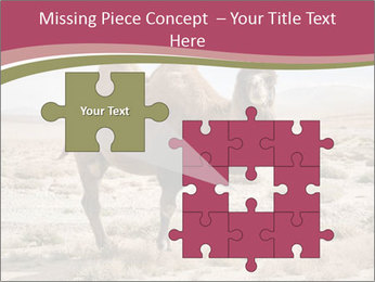 Funny Camel PowerPoint Template - Slide 45