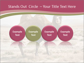 Funny Camel PowerPoint Template - Slide 76