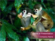 Wild Monkeys PowerPoint Templates