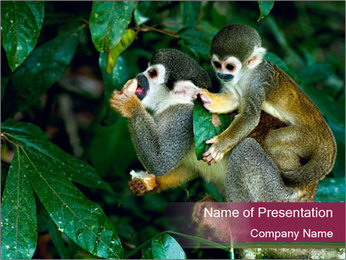 Wild Monkeys PowerPoint Template - Slide 1