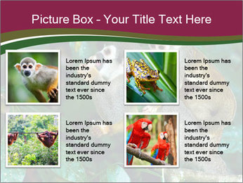 Wild Monkeys PowerPoint Template - Slide 14