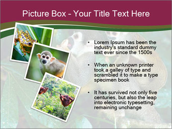 Wild Monkeys PowerPoint Template - Slide 17