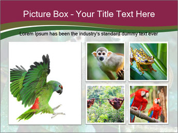 Wild Monkeys PowerPoint Template - Slide 19