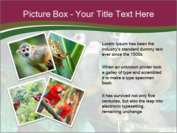 Wild Monkeys PowerPoint Template - Slide 23