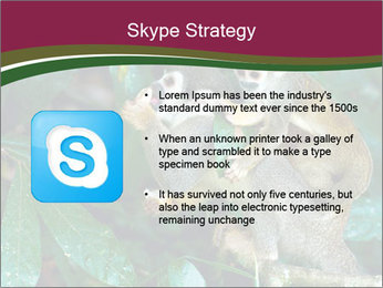 Wild Monkeys PowerPoint Template - Slide 8