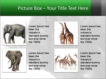 Wild Black Pig PowerPoint Templates - Slide 14