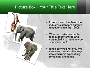 Wild Black Pig PowerPoint Templates - Slide 17