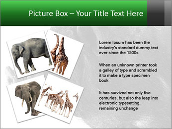 Wild Black Pig PowerPoint Templates - Slide 23