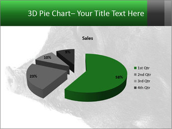 Wild Black Pig PowerPoint Templates - Slide 35