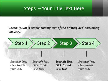 Wild Black Pig PowerPoint Templates - Slide 4