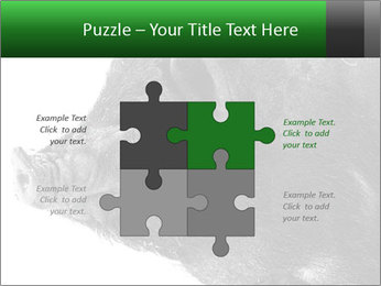 Wild Black Pig PowerPoint Templates - Slide 43