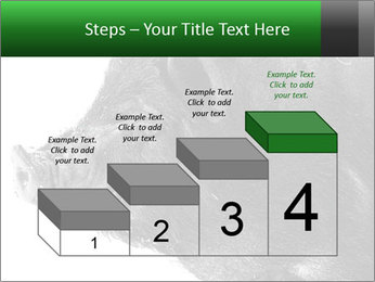 Wild Black Pig PowerPoint Templates - Slide 64