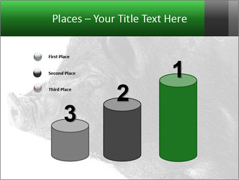 Wild Black Pig PowerPoint Templates - Slide 65