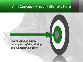 Wild Black Pig PowerPoint Templates - Slide 83