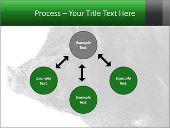 Wild Black Pig PowerPoint Templates - Slide 91