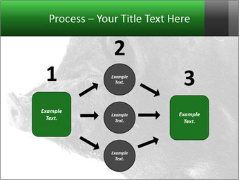 Wild Black Pig PowerPoint Templates - Slide 92