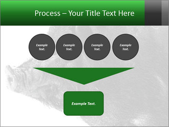 Wild Black Pig PowerPoint Templates - Slide 93