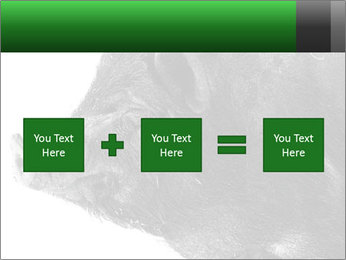 Wild Black Pig PowerPoint Templates - Slide 95