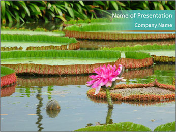 Waterlily PowerPoint Template - Slide 1