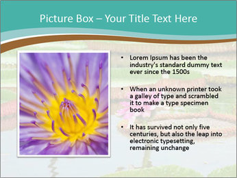 Waterlily PowerPoint Template - Slide 13