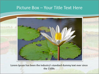 Waterlily PowerPoint Template - Slide 15